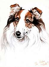 This beautiful old antique/vintage print of the Collie will look wonderful matted and framed!.Condition:   The print is in very good condition and slight tanning.            The print is from Diana Thorne's    Dogs: An Album of Drawings, published